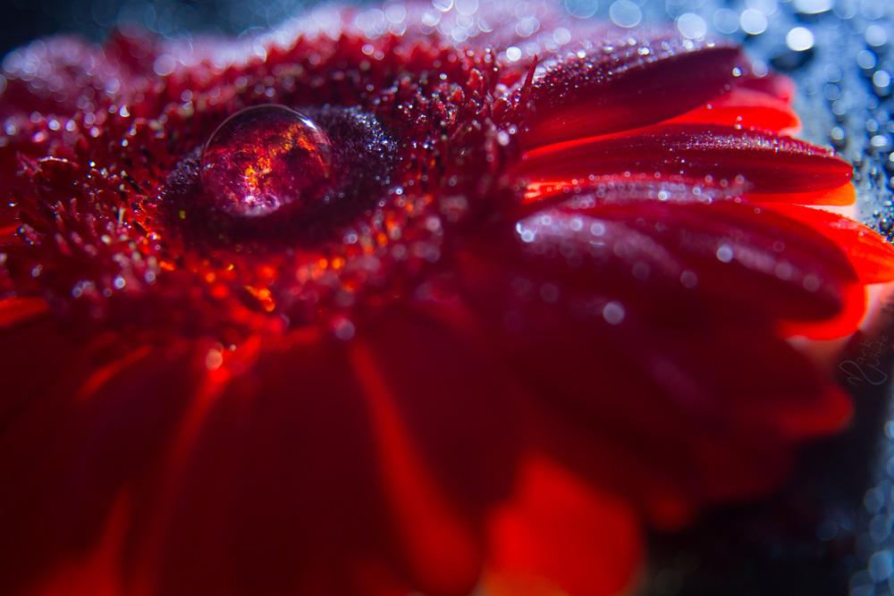 Nebulous Bloom